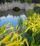 239687_chinese_garden_mannheim