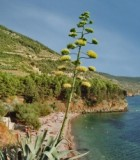 island-vis-croatia-1349254-m