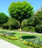 garden-1056943-m